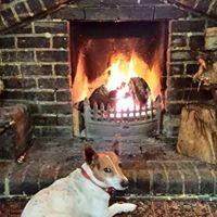 Dog Friendly Pub, Plough, Redhill